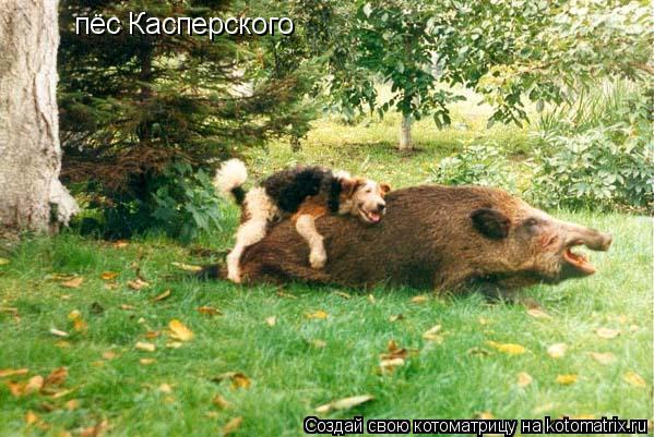 Котоматрица: пёс Касперского