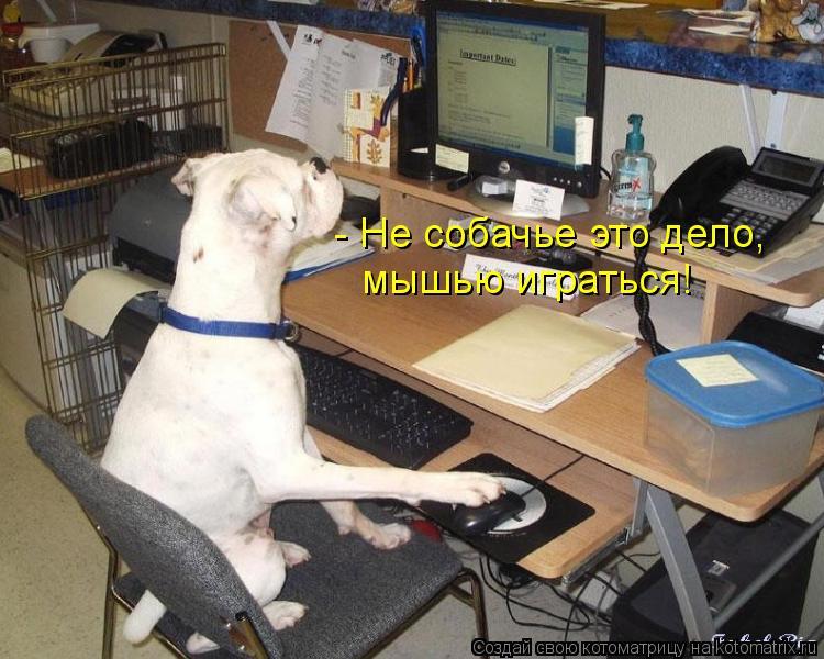 Котоматрица: - Не собачье это дело, мышью играться!