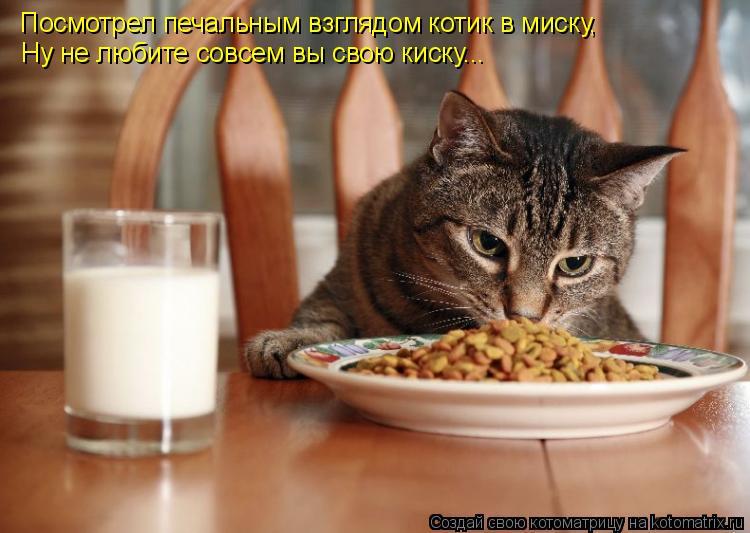 Котоматрица: Посмотрел печальным взглядом котик в миску, Ну не любите совсем вы свою киску...