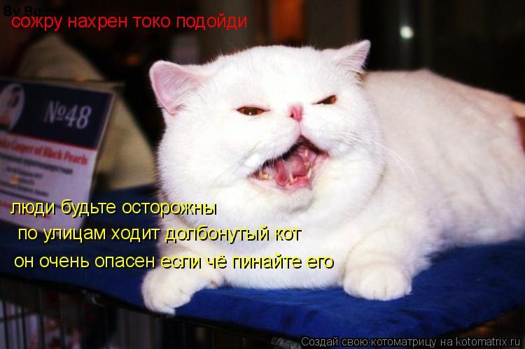 Котоматрица: сожру нахрен токо подойди люди будьте осторожны  по улицам ходит долбонутый кот он очень опасен если чё пинайте его