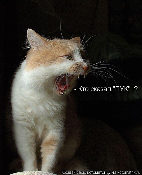 "Котоматрица: - Кто сказал ""ПУК"" !?"