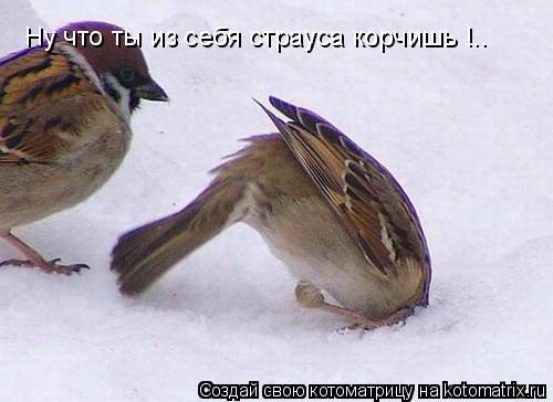 Котоматрица: Ну что ты из себя страуса корчишь !..