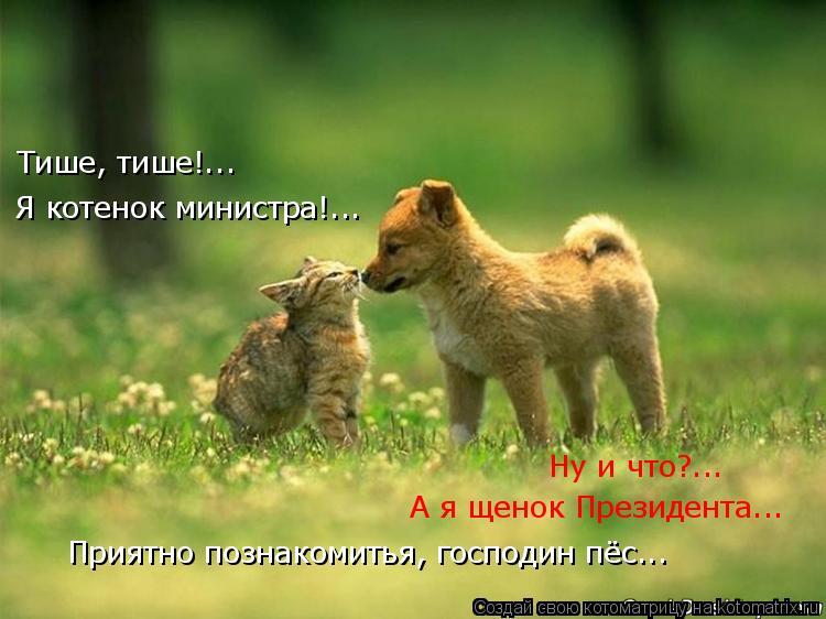 Котоматрица: Тише, тише!... Я котенок министра!... Ну и что?... А я щенок Президента... Приятно познакомитья, господин пёс...