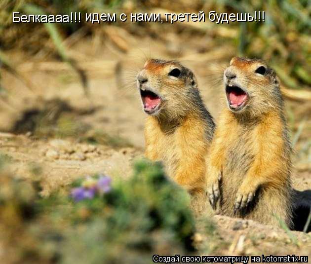 Котоматрица: Белкаааа!!! идем с нами,третей будешь!!!