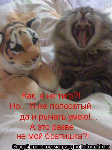Котоматрица: Как, я не тигр?! Но... Я же полосатый, да и рычать умею!... А это разве не мой братишка?!