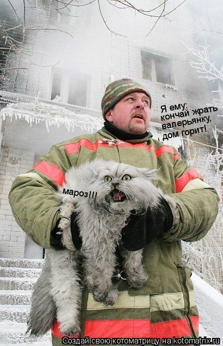 Котоматрица: Я ему: кончай жрать валерьянку, дом горит! мароз!!!