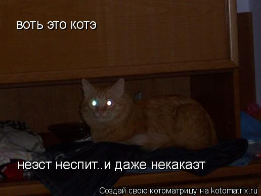 Котоматрица: воть это котэ неэст неспит..и даже некакаэт