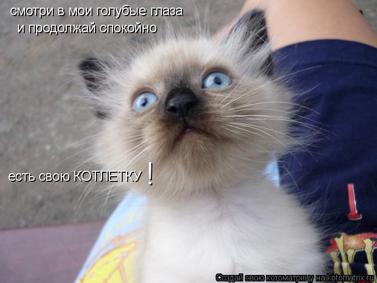 Котоматрица: смотри в мои голубые глаза и продолжай спокойно есть свою КОТЛЕТКУ  !