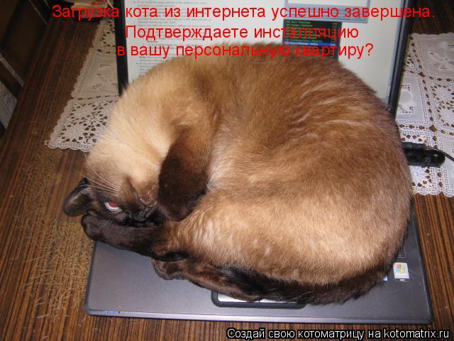 Котоматрица: Загрузка кота из интернета успешно завершена. Подтверждаете инсталляцию  в вашу персональную квартиру?
