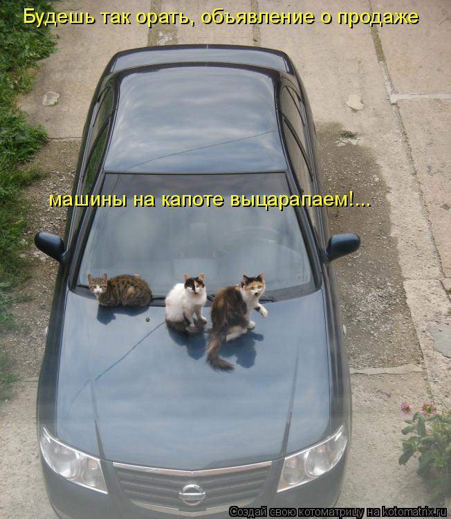 Котоматрица: Будешь так орать, объявление о продаже машины на капоте выцарапаем!...