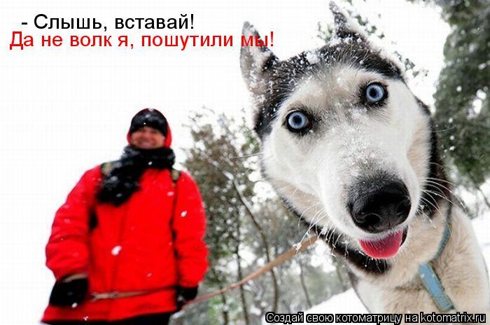Котоматрица: - Слышь, вставай! Да не волк я, пошутили мы!