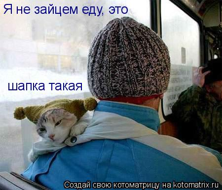Котоматрица: Я не зайцем еду, это шапка такая