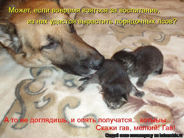 Котоматрица: Может, если вовремя взяться за воспитание, из них удастся вырастить порядочных псов? А то не доглядишь, и опять получатся... котыыы.... Скажи г