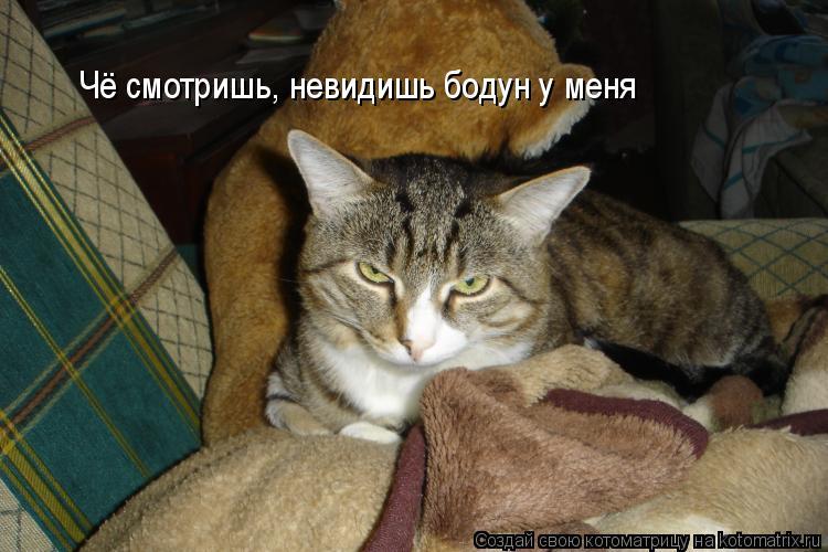 Котоматрица: Чё смотришь, невидишь бодун у меня