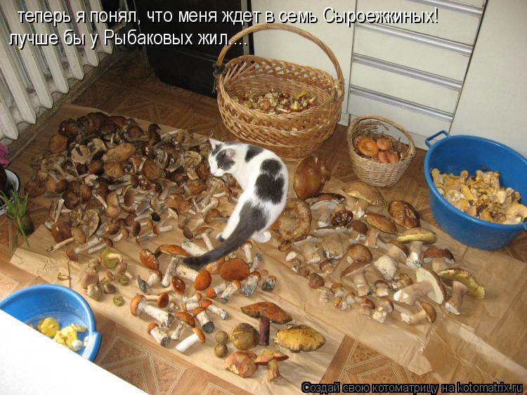 Котоматрица: теперь я понял, что меня ждет в семь Сыроежкиных! лучше бы у Рыбаковых жил....