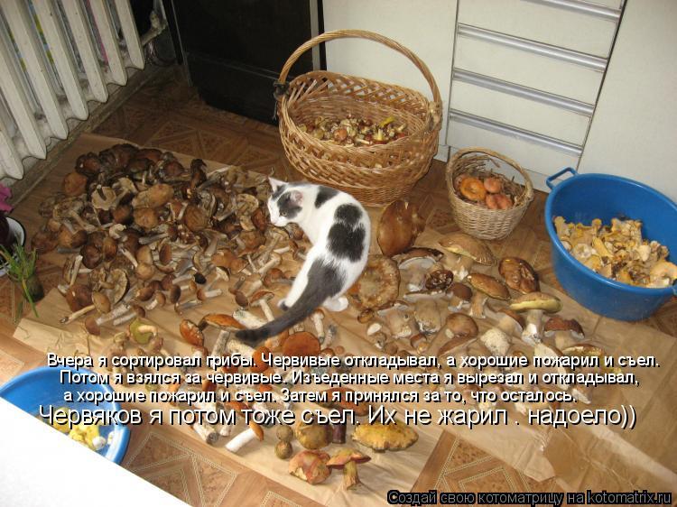 Котоматрица: Вчера я сортировал грибы. Червивые откладывал, а хорошие пожарил и съел.  Потом я взялся за червивые. Изъеденные места я вырезал и откладыва