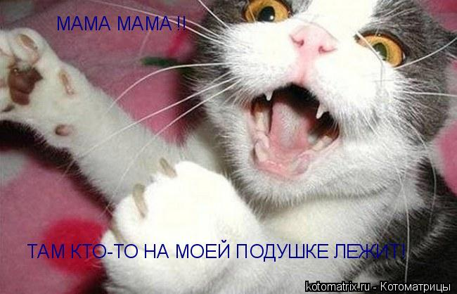 Котоматрица: МАМА МАMA !!  ТАМ КТО-ТО НА МОЕЙ ПОДУШКЕ ЛЕЖИТ!