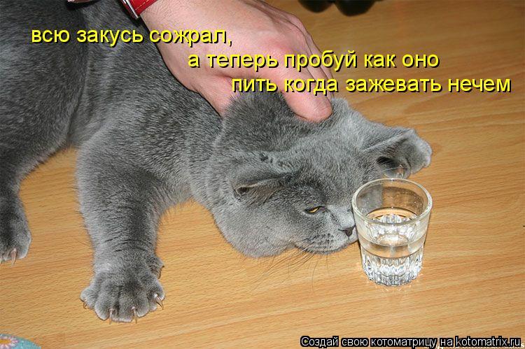 Котоматрица: всю закусь сожрал, а теперь пробуй как оно пить когда зажевать нечем