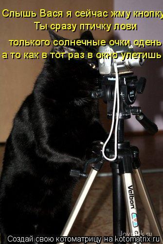 Котоматрица: Слышь Вася я сейчас жму кнопку  Ты сразу птичку лови  толького солнечные очки одень  а то как в тот раз в окно улетишь