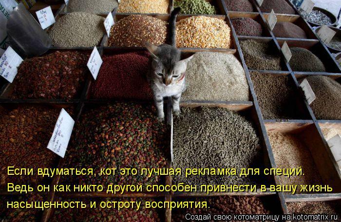 Котоматрица: Если вдуматься, кот это лучшая рекламка для специй.  Ведь он как никто другой способен привнести в вашу жизнь насыщенность и остроту воспри