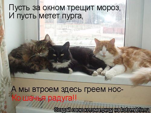 Котоматрица: Пусть за окном трещит мороз, И пусть метет пурга, А мы втроем здесь греем нос- Ко шачья радуга!!