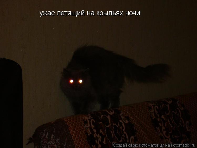 Котоматрица: ужас летящий на крыльях ночи