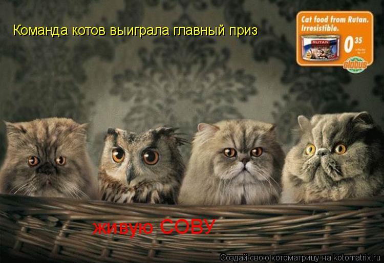 Котоматрица: Команда котов выиграла главный приз  живую СОВУ