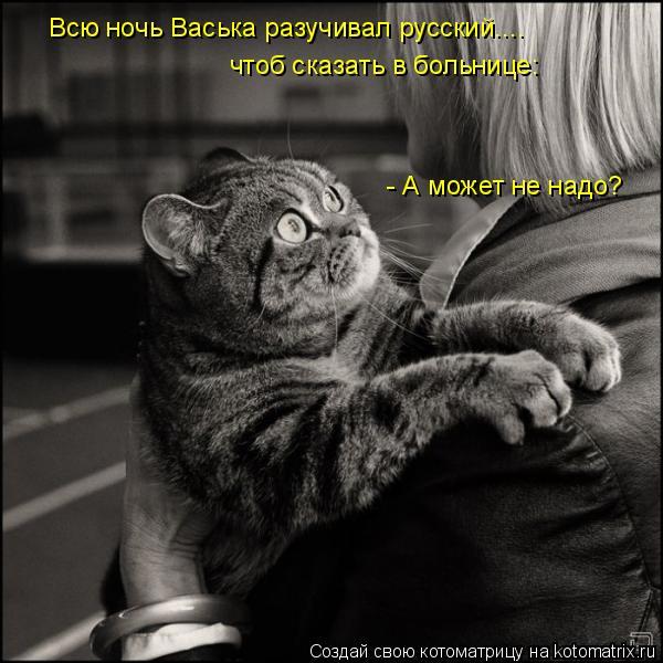 Котоматрица: Всю ночь Васька разучивал русский.... чтоб сказать в больнице: - А может не надо?