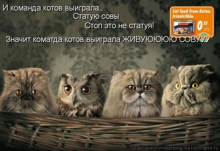 Котоматрица: И команда котов выиграла... Статую совы Стоп это не статуя! Значит коматда котов выиграла ЖИВУЮЮЮЮ СОВУУУ