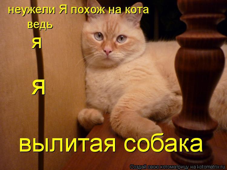 Котоматрица: неужели Я похож на кота ведь я вылитая собака я