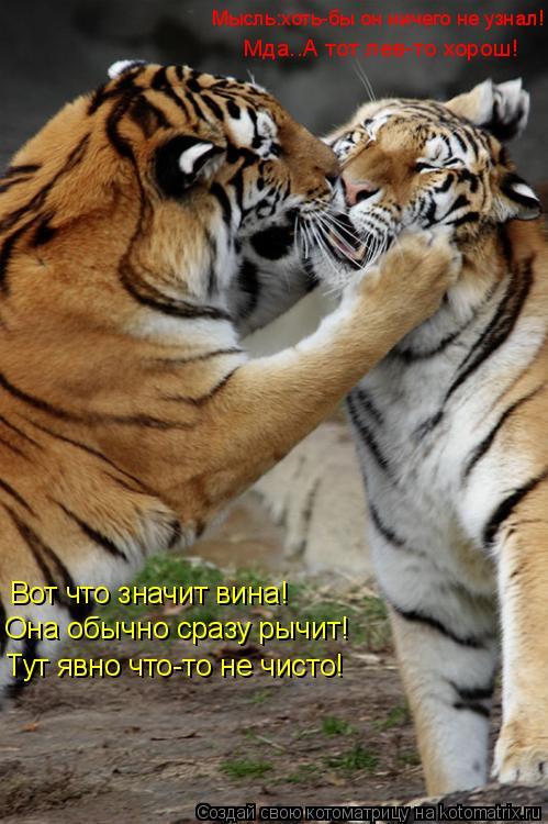 Котоматрица: Вот что значит вина! Она обычно сразу рычит! Тут явно что-то не чисто! Мда..А тот лев-то хорош!  Мысль:хоть-бы он ничего не узнал!