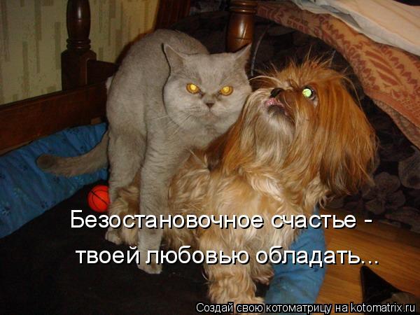Котоматрица: Безостановочное счастье -  твоей любовью обладать...