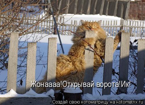 Котоматрица: Жонаааа!Открывай ворота!Ик!