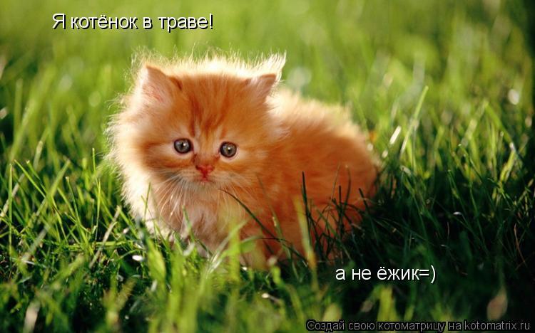 Котоматрица: Я котёнок в траве! а не ёжик=)
