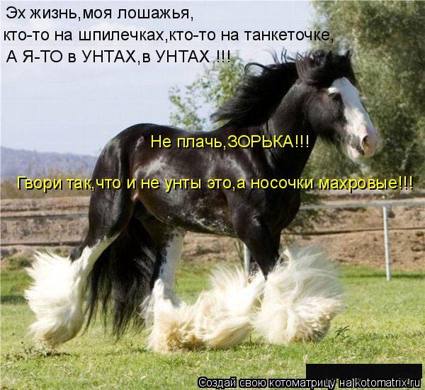 Котоматрица: Эх жизнь,моя лошажья, кто-то на шпилечках,кто-то на танкеточке, А Я-ТО в УНТАХ,в УНТАХ !!! Не плачь,ЗОРЬКА!!! Гвори так,что и не унты это,а носочки