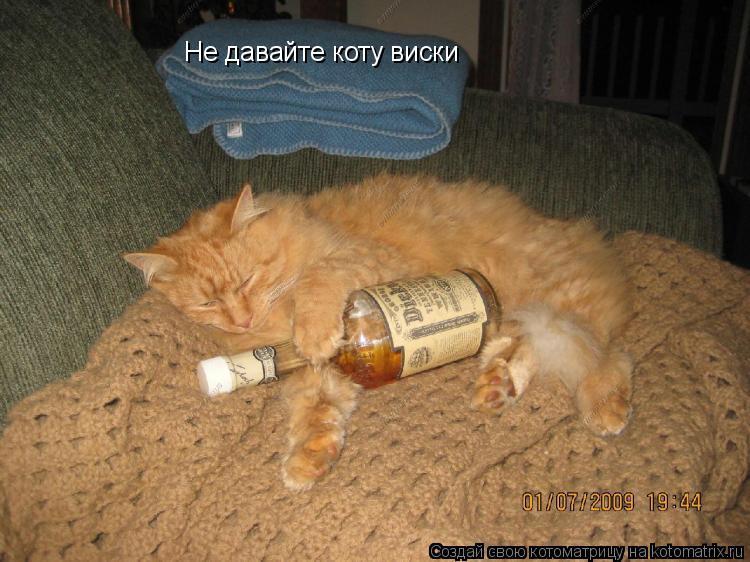 Котоматрица: Не давайте коту виски