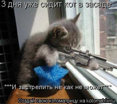 Котоматрица: 3 дня уже сидит кот в засаде ***И застрелить не как не может***