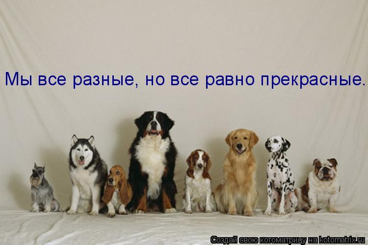 Котоматрица: Мы все разные, но все равно прекрасные.