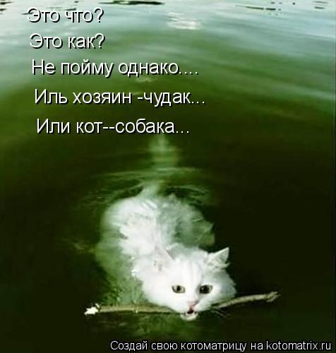 Котоматрица: Это что? Это как? Не пойму однако.... Иль хозяин -чудак... Или кот--собака...