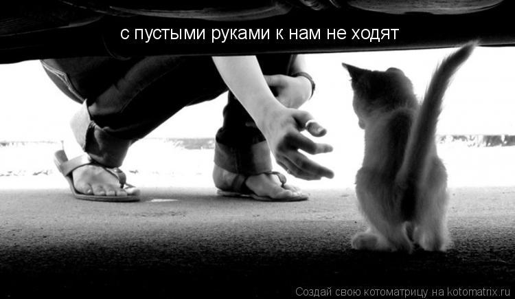 Котоматрица: с пустыми руками к нам не ходят