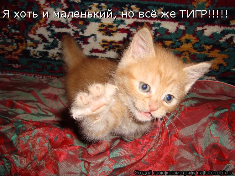 Котоматрица: Я хоть и маленький, но всё же ТИГР!!!!!