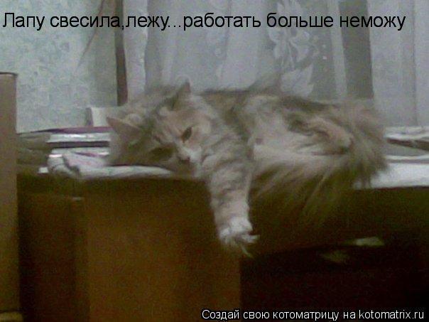 Котоматрица: Лапу свесила,лежу...работать больше неможу Лапу свесила,лежу...работать больше неможу