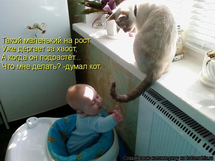 Котоматрица: Такой маленький на рост Уже дёргает за хвост, А когда он подрастёт... Что мне делать? -думал кот.