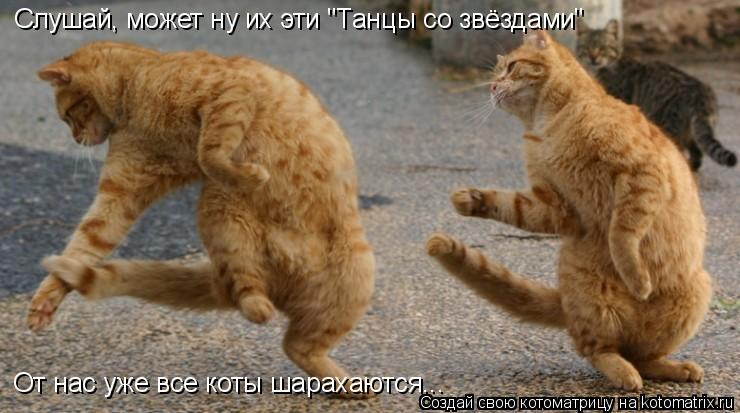 """Котоматрица: Слушай, может ну их эти """"Танцы со звёздами"""" От нас уже все коты шарахаются..."""