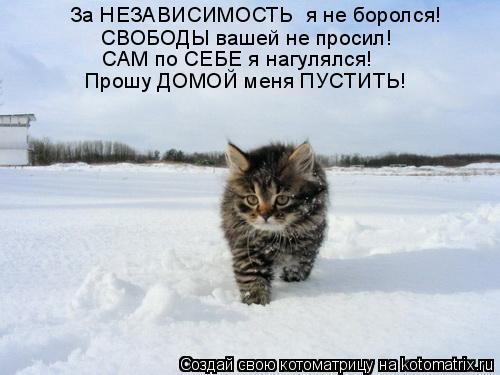 Котоматрица: За НЕЗАВИСИМОСТЬ  я не боролся! СВОБОДЫ вашей не просил! САМ по СЕБЕ я нагулялся! Прошу ДОМОЙ меня ПУСТИТЬ!