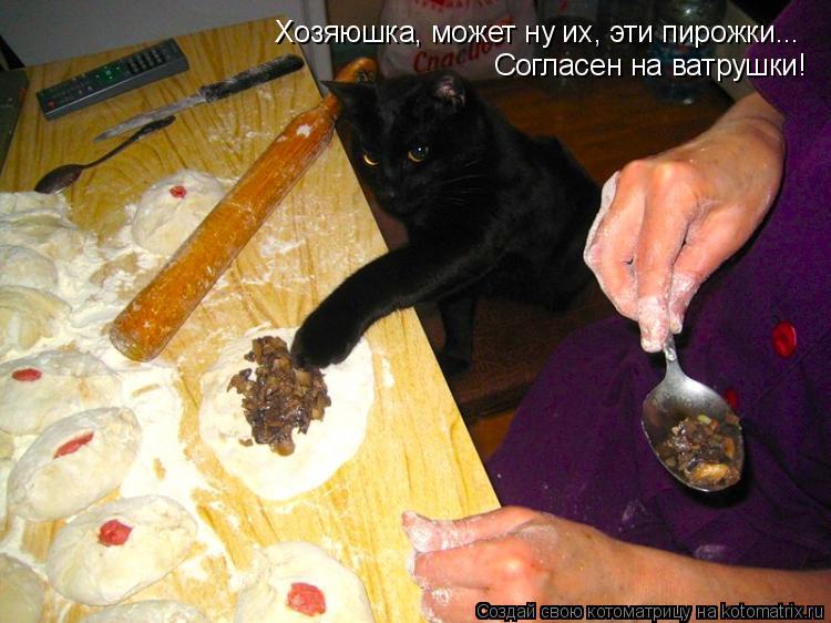 Котоматрица: Хозяюшка, может ну их, эти пирожки... Согласен на ватрушки!