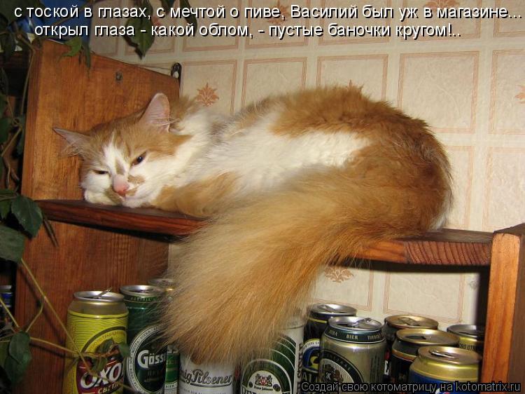 Котоматрица: с тоской в глазах, с мечтой о пиве, Василий был уж в магазине... открыл глаза - какой облом, - пустые баночки кругом!..