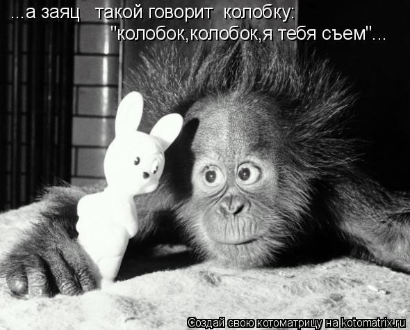 """Котоматрица: ...а заяц   такой говорит  колобку:  """"колобок,колобок,я тебя съем""""..."""