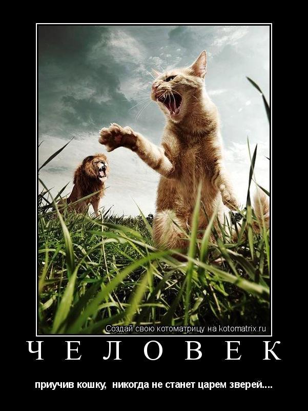 Котоматрица: Ч Е Л О В Е К  приучив кошку,  никогда не станет царем зверей....