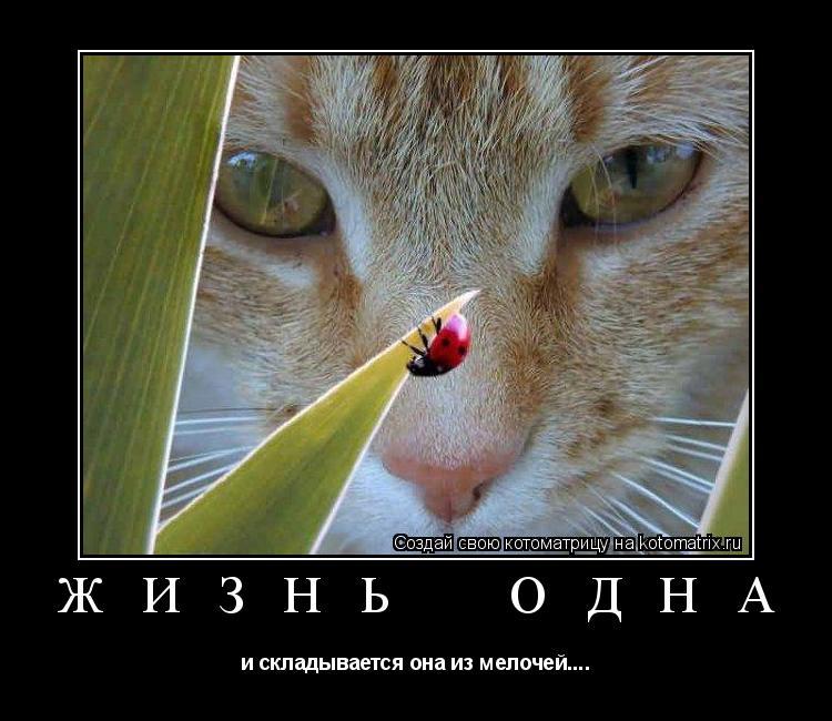 Котоматрица: Ж И З Н Ь    О Д Н А и складывается она из мелочей....